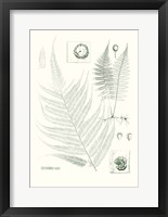 Framed Verdure Ferns VIII