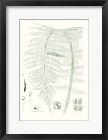 Framed Verdure Ferns IX