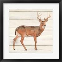 Northern Wild V Framed Print