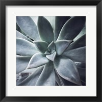 Framed Succulent Life
