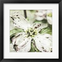 Framed Dogwood Floral