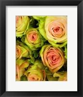 Framed Green & Pink Rose Bouquet
