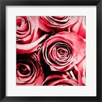 Framed Moonlight & Roses