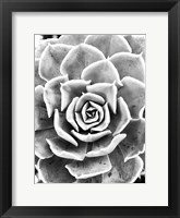 Framed Peace Love & Succulent black and white