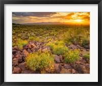 Framed Brittlebush Sunset