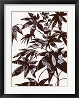 Framed Castor Bean 2