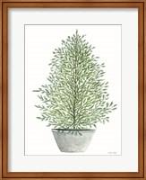 Framed Cedar Tree in Pot