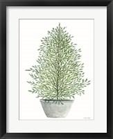 Cedar Tree in Pot Framed Print