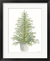 Spruce Tree in Pot Framed Print