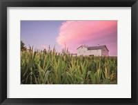 Framed Corn Crop