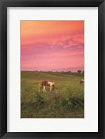 Framed Horse at Sunset