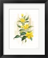 Goldilocks I Framed Print