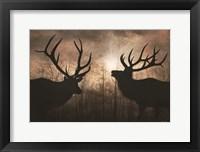 Framed Elk Sunrise III