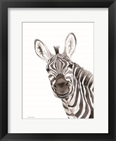 Safari Zebra Peek-a-boo Framed Print