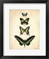 Butterflies 1 Framed Print