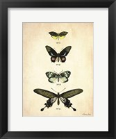 Butterflies 3 Framed Print