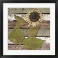 Sunwood I Framed Print