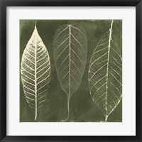 Columbian Forest I Framed Print