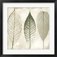 Framed Columbian Forest II
