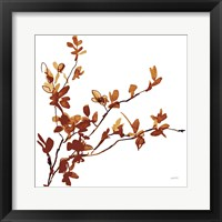 Colors of the Fall IX Framed Print