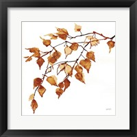 Colors of the Fall VIII Framed Print