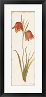 Red Tulip Panel Light Framed Print