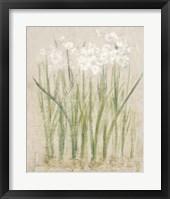 Framed Narcissus Light