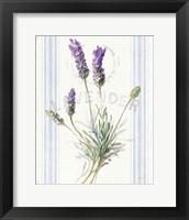 Floursack Lavender III Framed Print