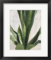 Tropical Study III Framed Print