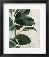 Tropical Study I Framed Print