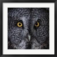 Framed Great Grey Owl