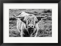 Framed Highland Cow Staring Contest