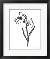 Ink Flower II Framed Print
