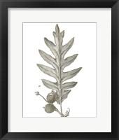 Histoire Naturelle Leaves I Framed Print