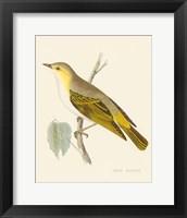 Engraved Birds III Framed Print