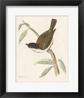 Engraved Birds II Framed Print