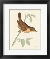 Engraved Birds I Framed Print