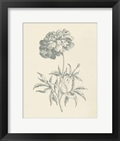 Eden Floral II Framed Print
