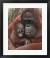 Framed Orangutan Mother and Baby