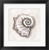 Shell I Framed Print