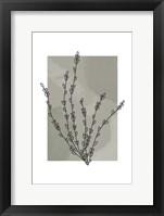 Framed Sage Floral II