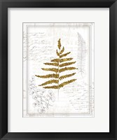 Ferns II Framed Print