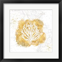 Golden Coral II Framed Print