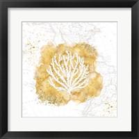 Golden Coral II Framed Print