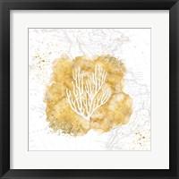 Golden Coral III Framed Print