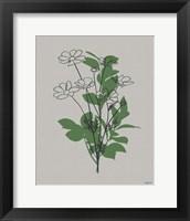 Line Botanical II Framed Print