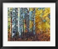 Framed Autumn Aspens