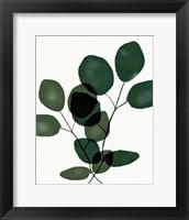Green Eucalyptus III Framed Print