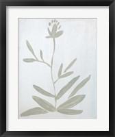 Framed Flower on White