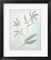 Framed Leaves on White
